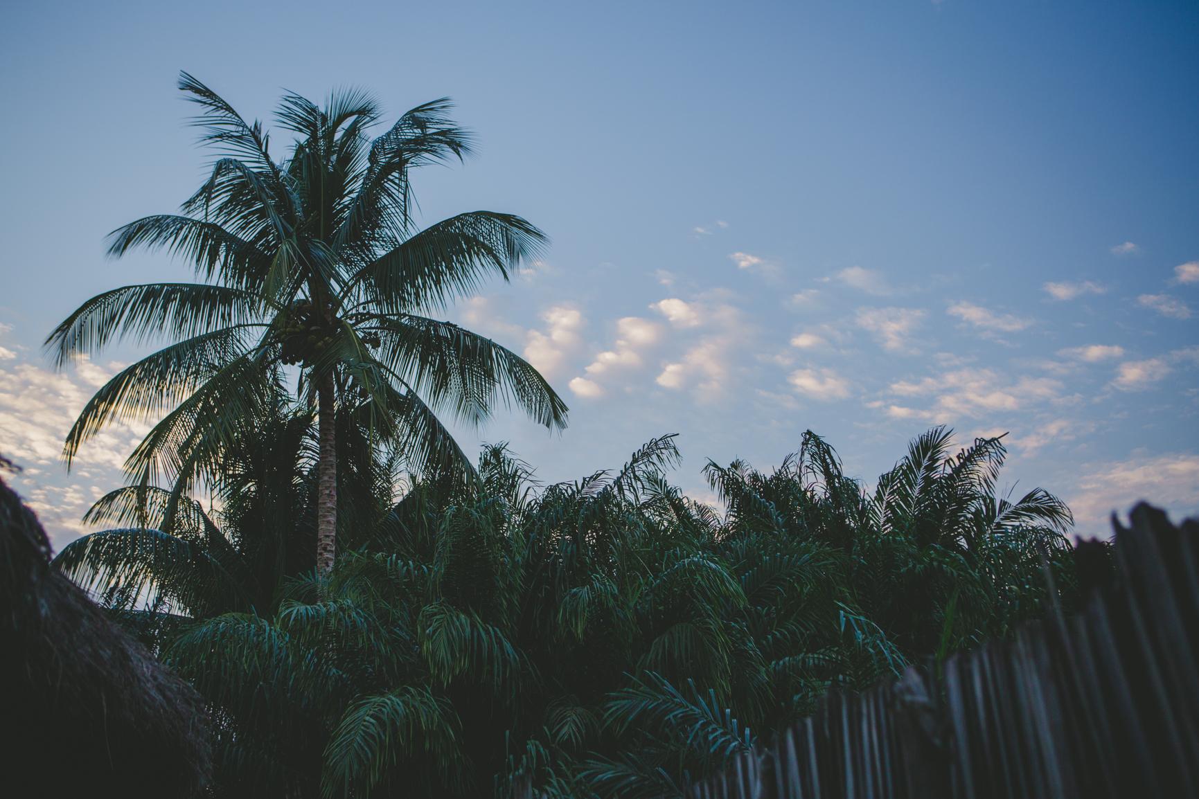 Photo de palmier