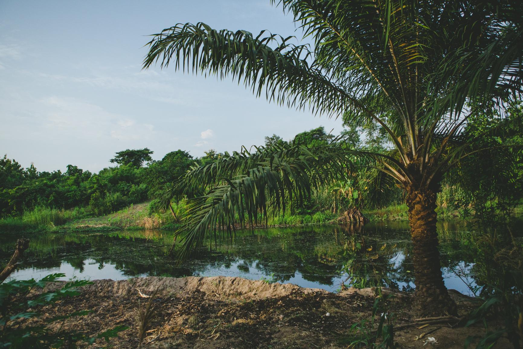 Photo de palmier au bord du fleuve
